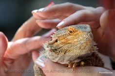Animais/Um lagarto também tem sentimentos