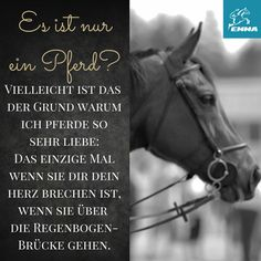 Es ist nur ein Pferd???