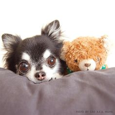 Photo by dog_dada
