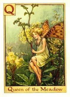 Queen of The Meadow Flower Fairy Vintage Print by Cicely Mary Barker. first published in London by Blackie, 1934 in A Flower Fairy Alphabet.