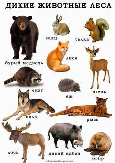 Math For Kids, Science For Kids, Science And Nature, Wild Animals List, Russia Culture, Russian Lessons, Russian Language Learning, Morning Girl, Dora