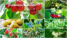 Cantinho verde - #horta e #jardim: Calendário horticula de Junho