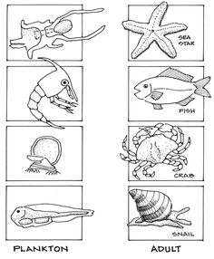 Worksheet Marine Biology Worksheets varied types of free ocean biology worksheets and activities learning about the saltwater ecosystem plankton nekton benthos marine reptiles whales more