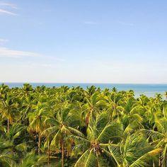 Palmiers  Palm Trees  Siargao ( Philippines )  Comme vous le savez aux Philippines nous avons fait voler notre drone. Et bien cette photo a été prise lors du premier vol et il est très marquant pour moi car comme on le remarque nous étions sur une ile en plein milieu dune forêt de palmiers. Quel bonheur davoir réussi à le faire voler et surtout davoir pris des images alors que nous étions seuls sur cette ile. Un instant magique qui ne se présente que rarement dans une vie. Je ne me suis…