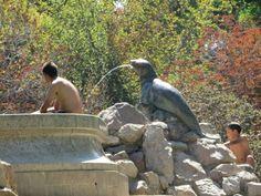 Pileta parque forestal (chile) Penguins, Chile, Animals, Parks, Pictures, Animales, Chili, Animaux, Chilis