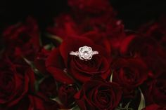 20 Amazing - Elegant Wedding Photography Ideas : Thrilling silver colored ring on top of red roses Free Wedding, Wedding Day, Wedding Rings, Wedding Poses, Wedding Bride, Photography Jobs, Wedding Photography, Photography Courses, Photography Portfolio