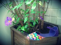 Bumerrangue psicodelico detalhe violeta.