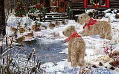 Soft Coated Wheaten Terrier Christmas Camp -  by Margaret Sweeney