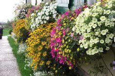 Flower Power! Flower Power, Flowers, Plants, Flower Jewelry, Petunias, Garten, Flora, Plant, Royal Icing Flowers