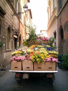 Bella Roma...freshly picked flowers headed to an outdoor market...Campo de' Fiori?
