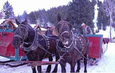 4. Take a sleigh ride up to Trail Creek Cabin in Sun Valley.