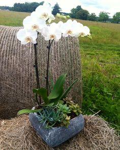 orchid/succulent