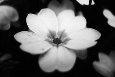 Flowers Flowers, Plants, Photography, Image, Photograph, Fotografie, Photoshoot, Plant, Royal Icing Flowers