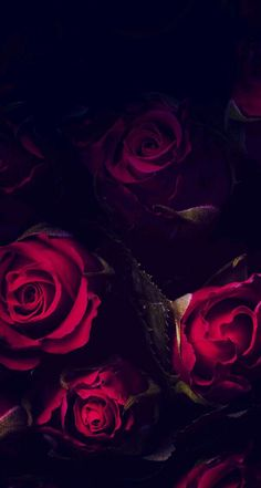 new ideas flowers wallpaper bedroom red Best Flower Wallpaper, Rose Wallpaper, Floral Wallpaper Phone, Qhd Wallpaper, Wallpaper Samsung, Phone Backgrounds, Black Backgrounds, Wallpaper Backgrounds, Tumblr Roses