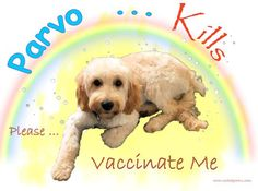 Parvo Kills  Please Vaccinate Me