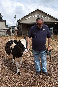 Professor Gradwohl with Paula Sue a Miniature Holstein Heifer. I would love a miniature dairy cow! There's mini dairy cows? Miniature Cow Breeds, Miniature Cattle, Mini Cows, Mini Farm, Dwarf Cow, Newborn Christmas Pictures, Cow Photos, Holstein Cows, Dairy Cattle