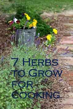 7 herbs to grow for cooking