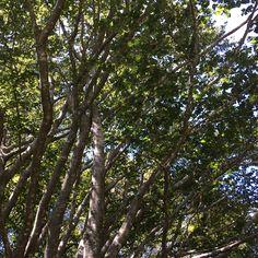 Foglie alberi nel bosco