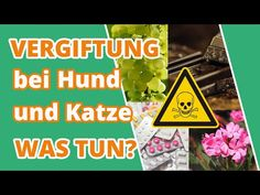 Häufige Vergiftungen bei Hund und Katze   Symptome, Behandlung, Vorbeugung - YouTube Pets, Youtube, Dog Owners, Vet Office, Happy Life, Further Education, Youtubers, Youtube Movies, Animals And Pets