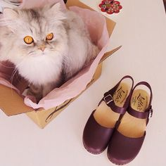 cat & clogs