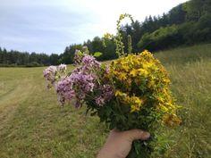 Kedy a kde zbierať bylinky? Ako ich spracovať, uskladniť a čo z nich pripraviť? Herbalism, Detox, Health Fitness, Plants, Garden, Garten, Health And Wellness, Health And Fitness, Planters