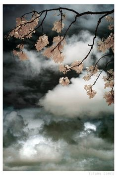 Autumn nature stormy sky infrared photograph, fine art photo print, landscape, nature, trees, England, UK