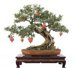 ~ Bonsai ♦️More Pins Like This At FOSTERGINGER @ Pinterest ♦️