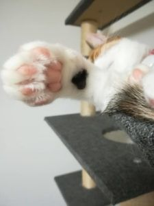 シャープ ペットケアモニターを多頭飼いで使ったレビュー価格や口コミも紹介 ペットケア ペット ネコ