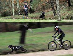 Este mes vamos a dar a conocer un deporte que está ganando más adeptos en los últimos tiempos, el canicross. Se trata de una práctica deportiva en la que tanto el perro como el corredor comparten por igual los esfuerzos y los beneficios que está aporta.