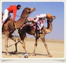 Rajasthan Explored provides complete information about Adventure and Sports in Rajasthan. Most popular adventure in rajasthan are Horse Safari, Camel Safari, Trekking, Water Sports, Wildlife Adventure, Parasailing and more.