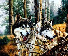 Tony Wooding  - wolves