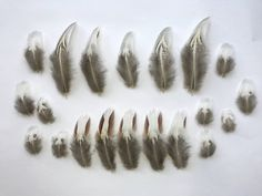 20 x Natural Pheasant Feathers Grey + Brown/ Red, White, Cream + Black - Fluffy - 2 - 8cm Real Millinery Crafts - Patterned - Mixed by TheArtofRegressing on Etsy