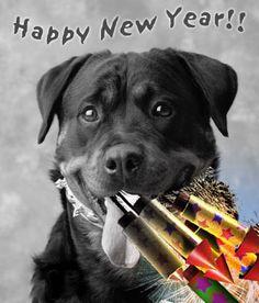 Happy New Year Dog Holiday Happy New Year Pet Birds