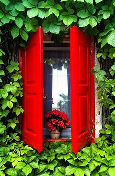 Eye-catching red, surrounded by greenery.