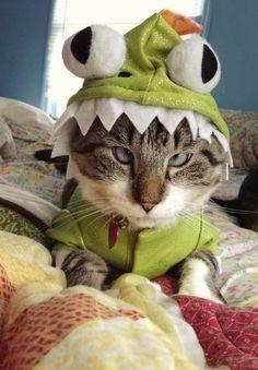 O gatinho vestido de sapo