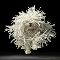 "Komondor a. ""Mop"" Dog by Tim Flach Mop Dog, Dog Cat, Pet Pet, Chien Komondor, I Love Dogs, Cute Dogs, Hungarian Puli, Animals Beautiful, Cute Animals"