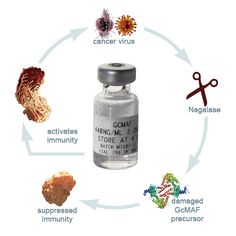 What is GcMAF? GcMAF is a protein made by all healthy people. Starter kit can be bought at www.BravoUSA.com