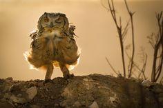 لا يخلو تصوير الطيور من التحدّي، خصوصًا عند تحليقها في الهواء، ويمكنك التقاط صور آسرة للطيور في حالات متعددة، كأن تكون واقفةعلى غصن، أو تلتقط صعامها، أو عندما تتودد إلى بعضها البعض، أو عندما ترعى صغارها، وجمال الصورة التي ستحصل عليها يستحق خوض هذا التحدّي وستكون فخورًا جدًّا بالنتائج. 1 تجميد الحركة تمتاز الطيور بأنها …