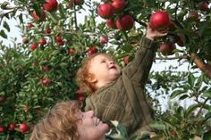 Savoring Your Sixties shared one of our posts on their blog! Check out this great site, and see some fun activities you can do with your family to celebrate the autumn season! http://rescuealertofca.com/