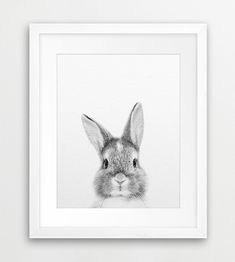 Rabbit Print Rabbit Photo Black And White Animal Print by synplus