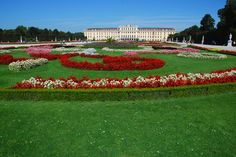 admire the beautiful flowers at Schonbrunn Palace Beautiful Flowers, Palace, Dolores Park, Travel, Austria, Viajes, Palaces, Destinations, Traveling