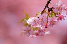 Spring blooms| Flickr – Compartilhamento de fotos!