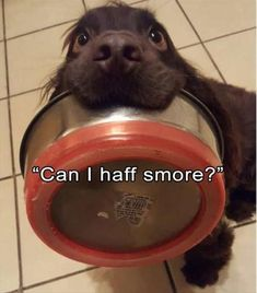 Enjoy funny animal pictures of the day volume 7 that will make your day. The smile is one of the best meditation and these 14 funny animal pics of the day definitely make you happy and put the smile on your face…lol Funny Dog Videos, Funny Animal Memes, Cute Funny Animals, Dog Memes, Funny Animal Pictures, Funny Cute, Funny Dogs, Funny Memes, Top Funny