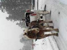 Horse drawn Carriage rides during the winter in the Land of Love!