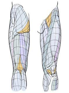 Inicio / Twitter Leg Reference, Female Pose Reference, Anatomy Reference, Drawing Reference, Leg Anatomy, Anatomy Drawing, Anatomy Art, Human Anatomy, Feet Drawing