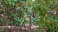 Image detail for -CAN YOU SEE ME?   ANIMAL CAMOUFLAGE « The Conservation Report