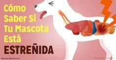 Los gatos y perros en ocasiones se estriñen y es importante saber la causa del problema y la mejor manera de resolverlo. http://mascotas.mercola.com/sitios/mascotas/archivo/2017/07/23/estrenimiento-en-perros-gatos.aspx?utm_source=mascotas&utm_medium=email&utm_content=art1&utm_campaign=20170723&et_cid=DM152406&et_rid=2087751015