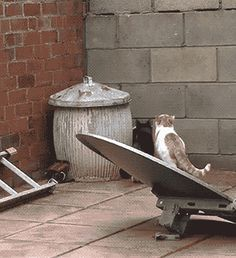 Synchronized Feline Parkour