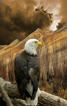 Bald Eagle Beauty!  ♥ ♥  www.paintingyouwithwords.com