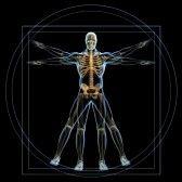 Body and skeleton in vitruvian man  - 3d render stock photography